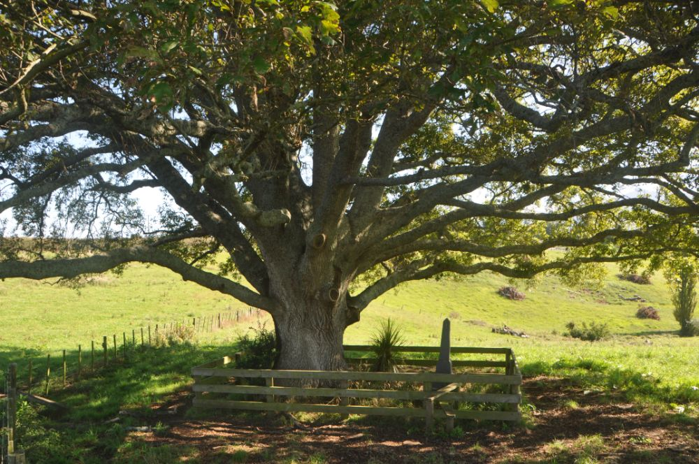 Lonely grave on farmland near Paterangi